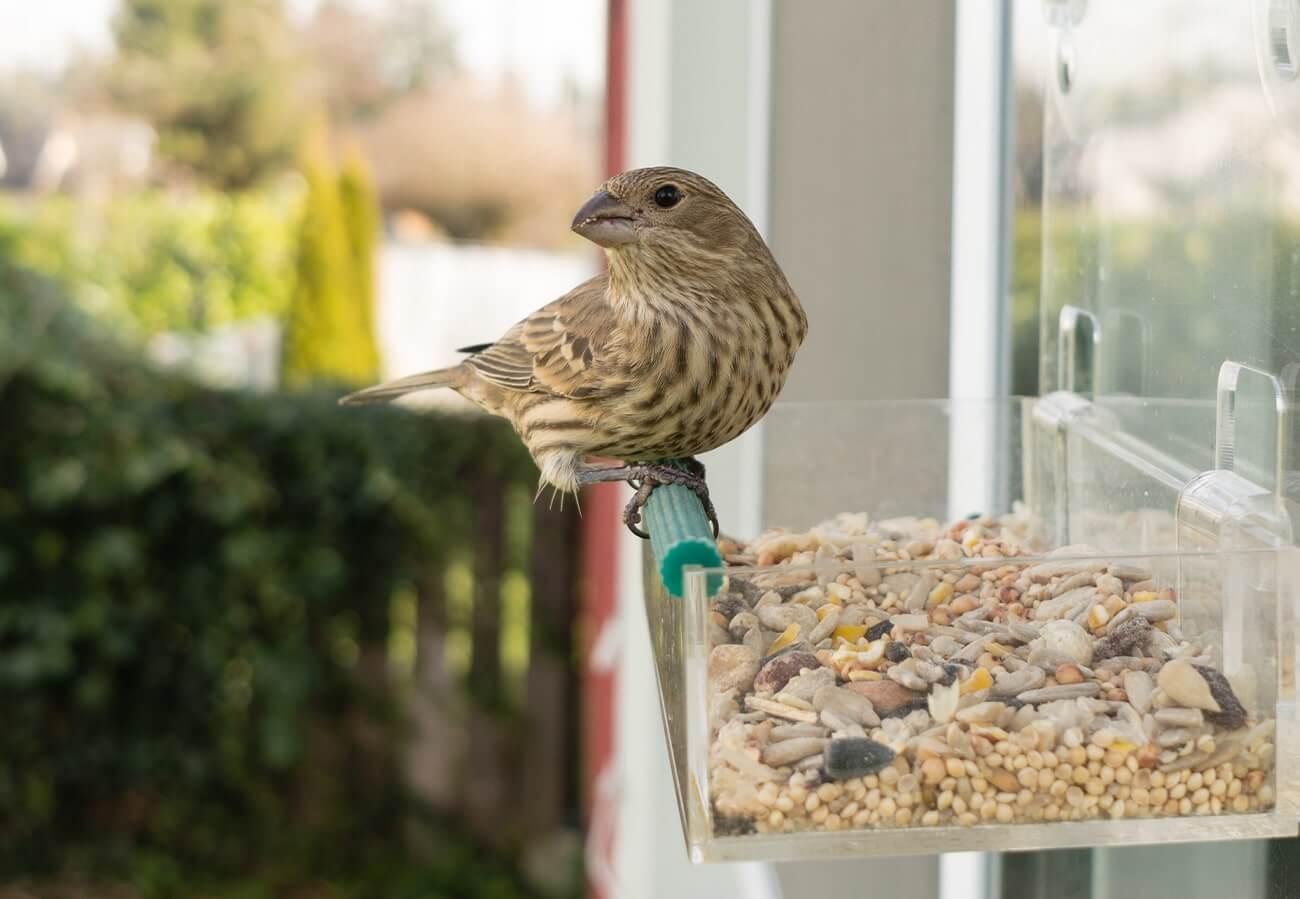 Pflanzen-Tipps für den Winter - Vogelhaus