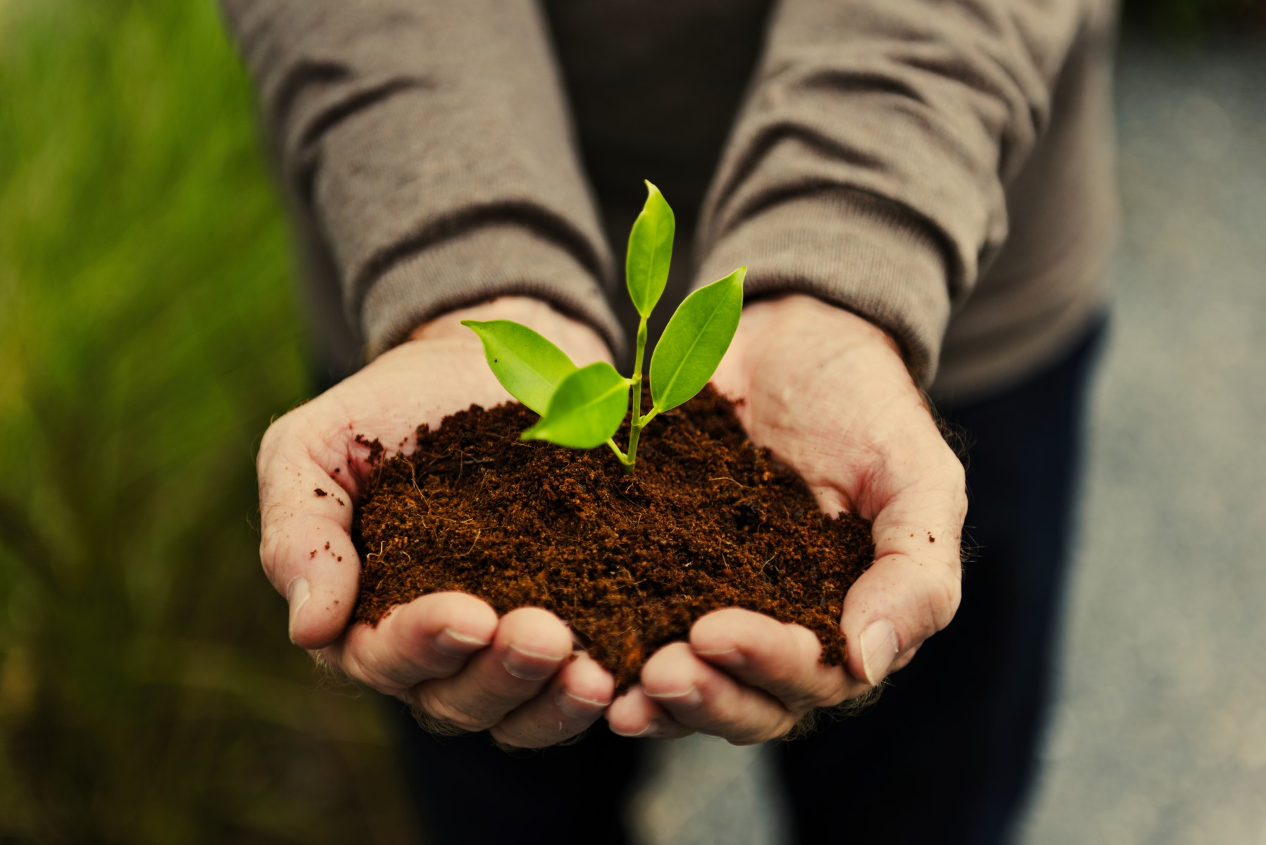 Eine gesunde Erde ist die Grundlage für einen schönen und lebendigen Garten.