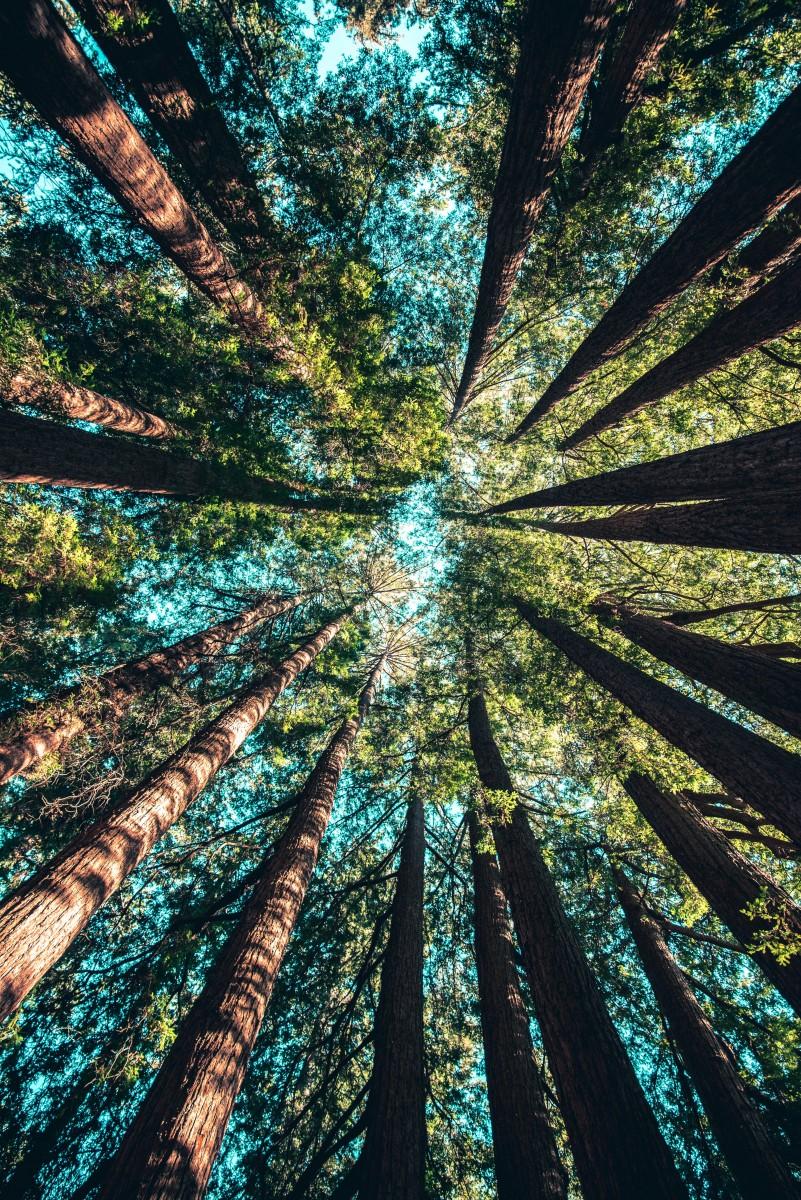 Spaziergang im Wald - Kraft der Bäume und der Natur