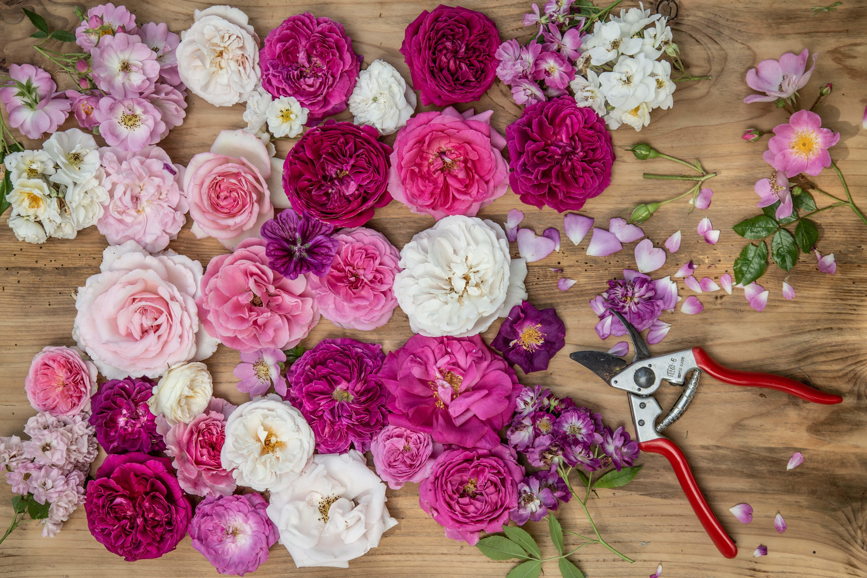 Bunte Blumen aus dem Garten zur Deko