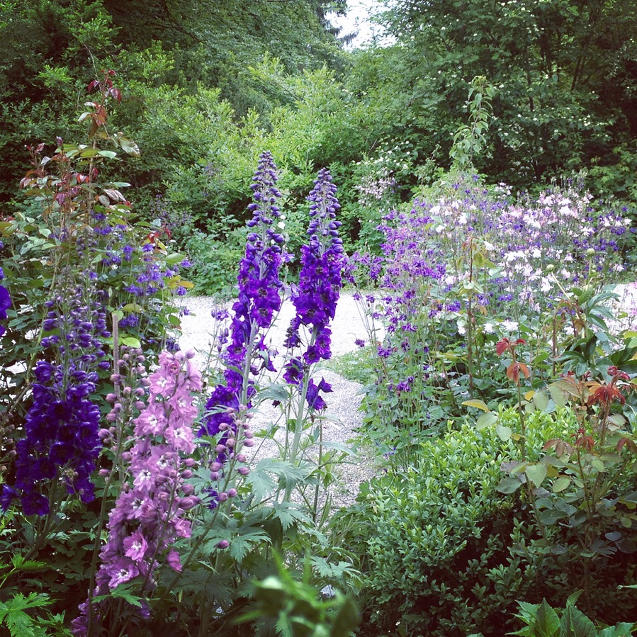 Verwachsene blühende Blumen - Cottage Garten