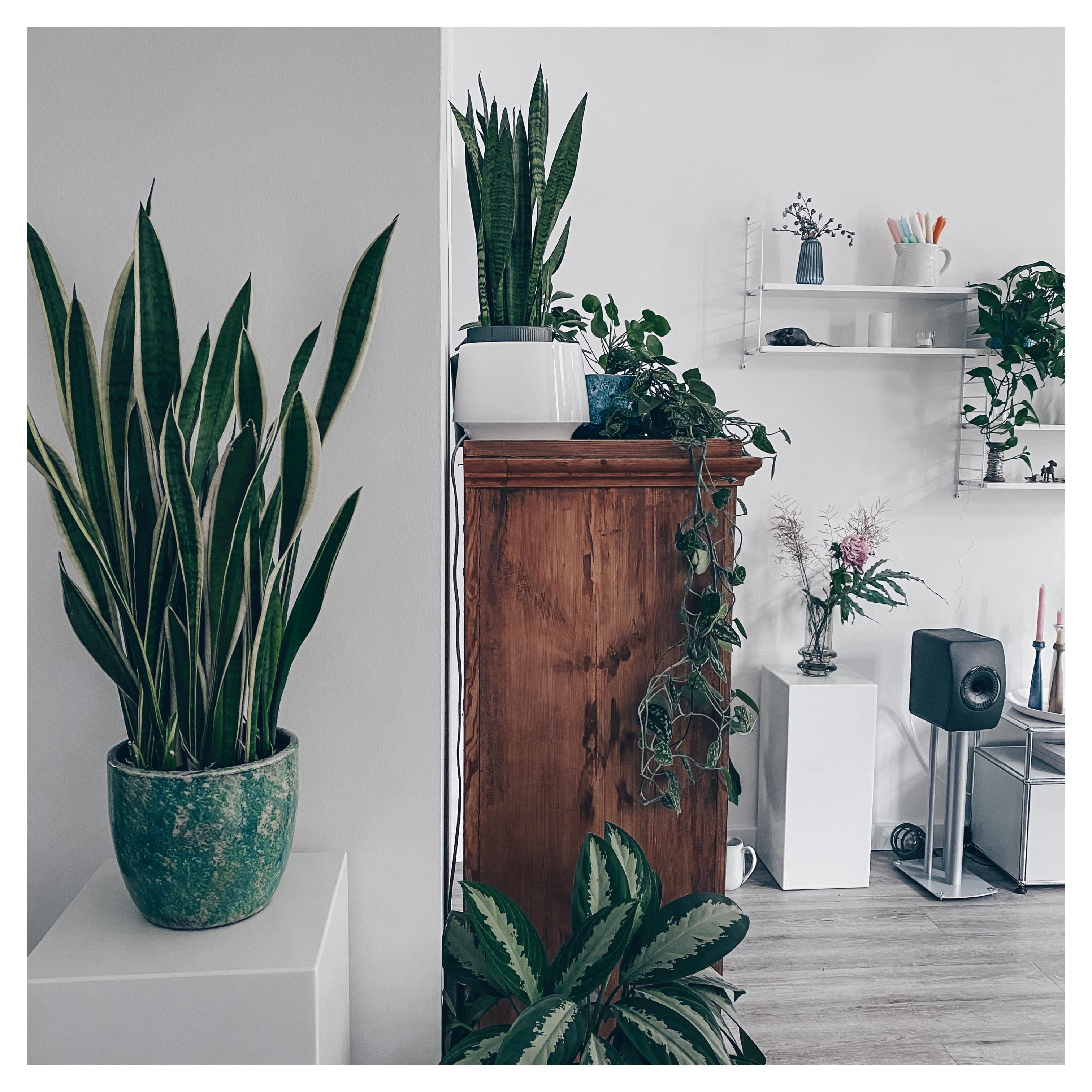 helles Wohnzimmer mit Zimmerpflanzen - Homestory: Neuanfang in der alten Tankstelle