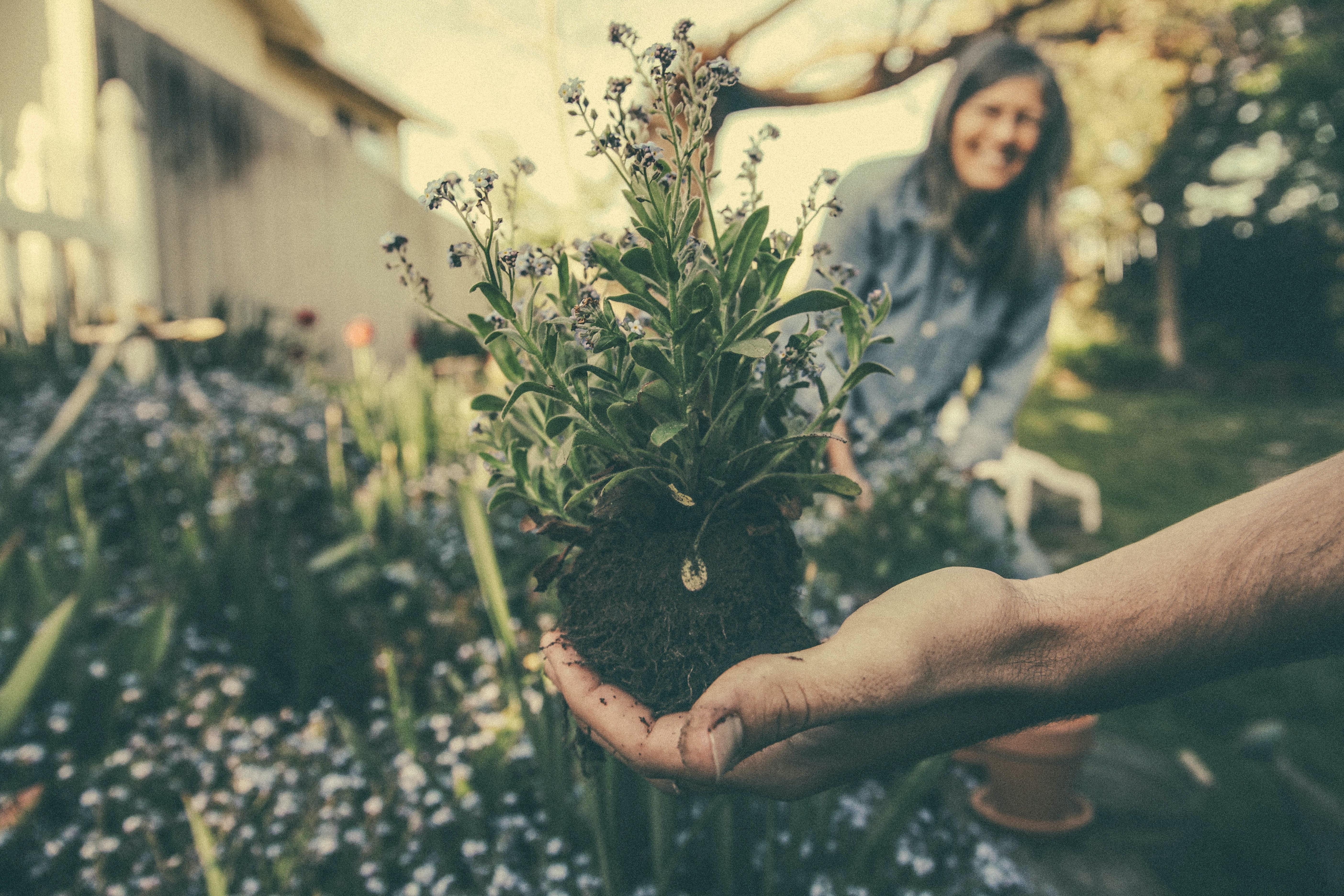Das müsst ihr zum Thema Blumen und Pflanzen wissen