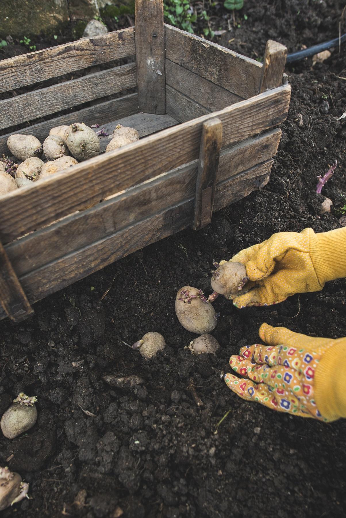 Kartoffelkisten auch super geeignet zur Vorratslagerung