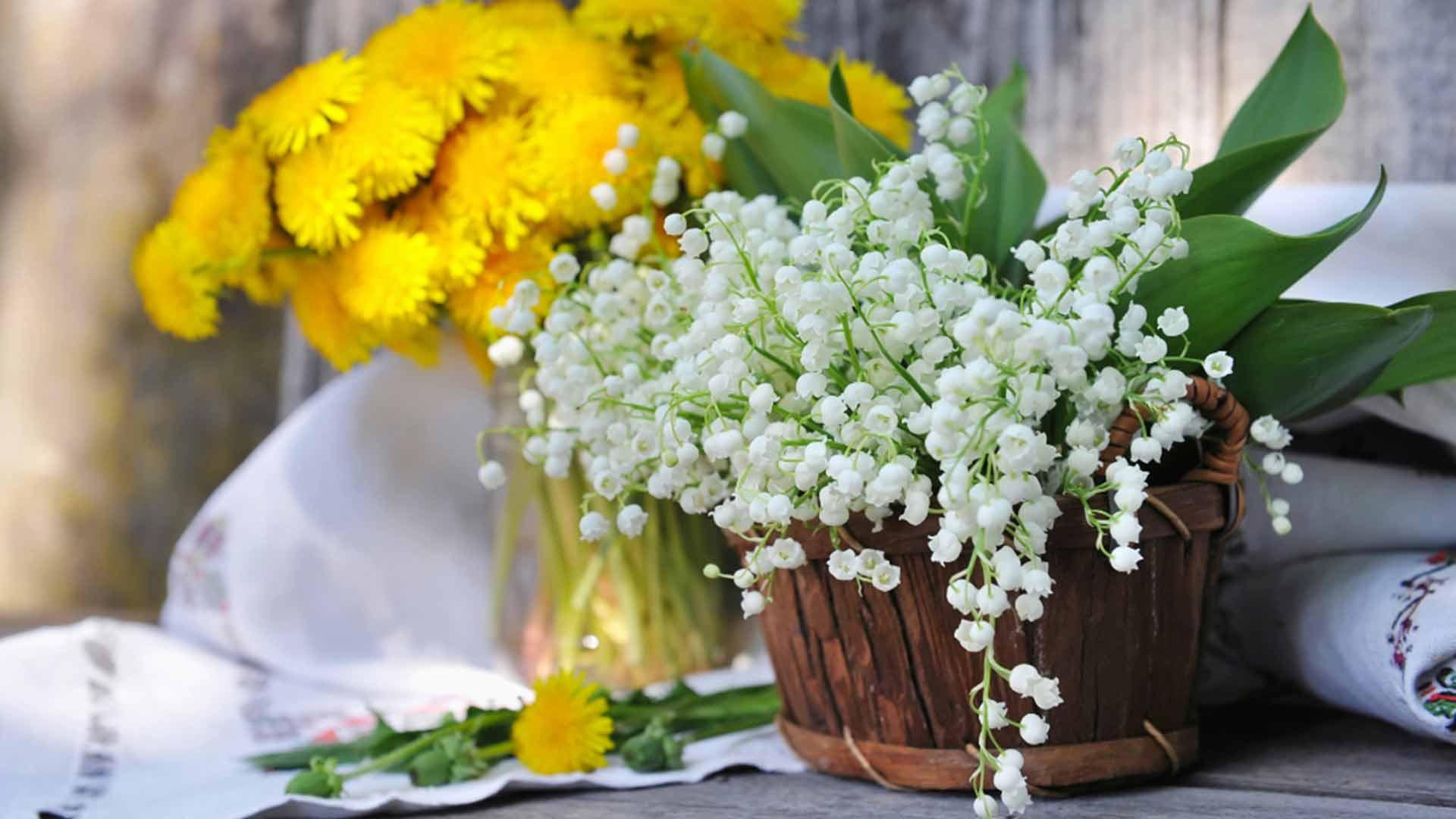 Maiglöckchen pflegen und pflanzen So geht's einfach desmondo garten