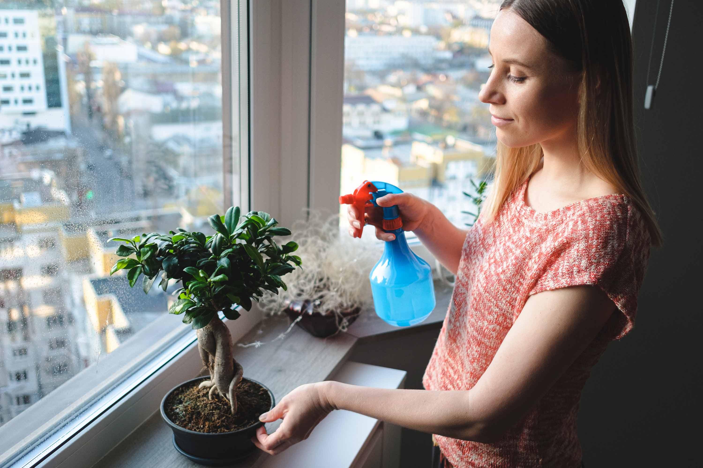 Bonsai - Pflanzen und Pflegen - So gehts.