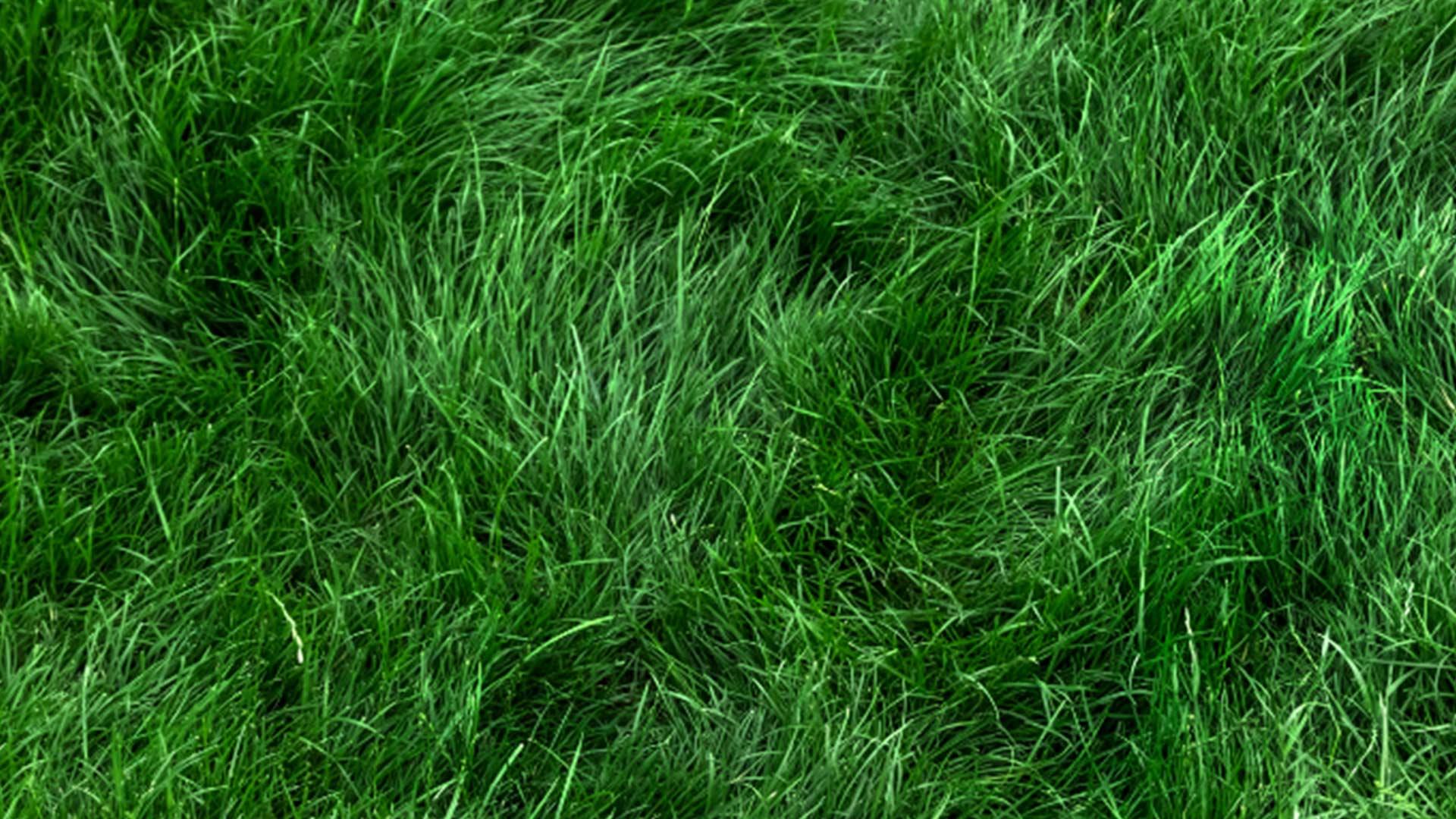 Rasen säen einfach- so geht es richtig einfach desmondo garten