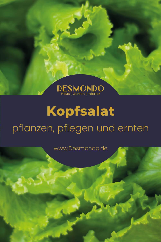 Der Kopfsalat - All-Rounder in Garten und Küche einfach desmondo garten