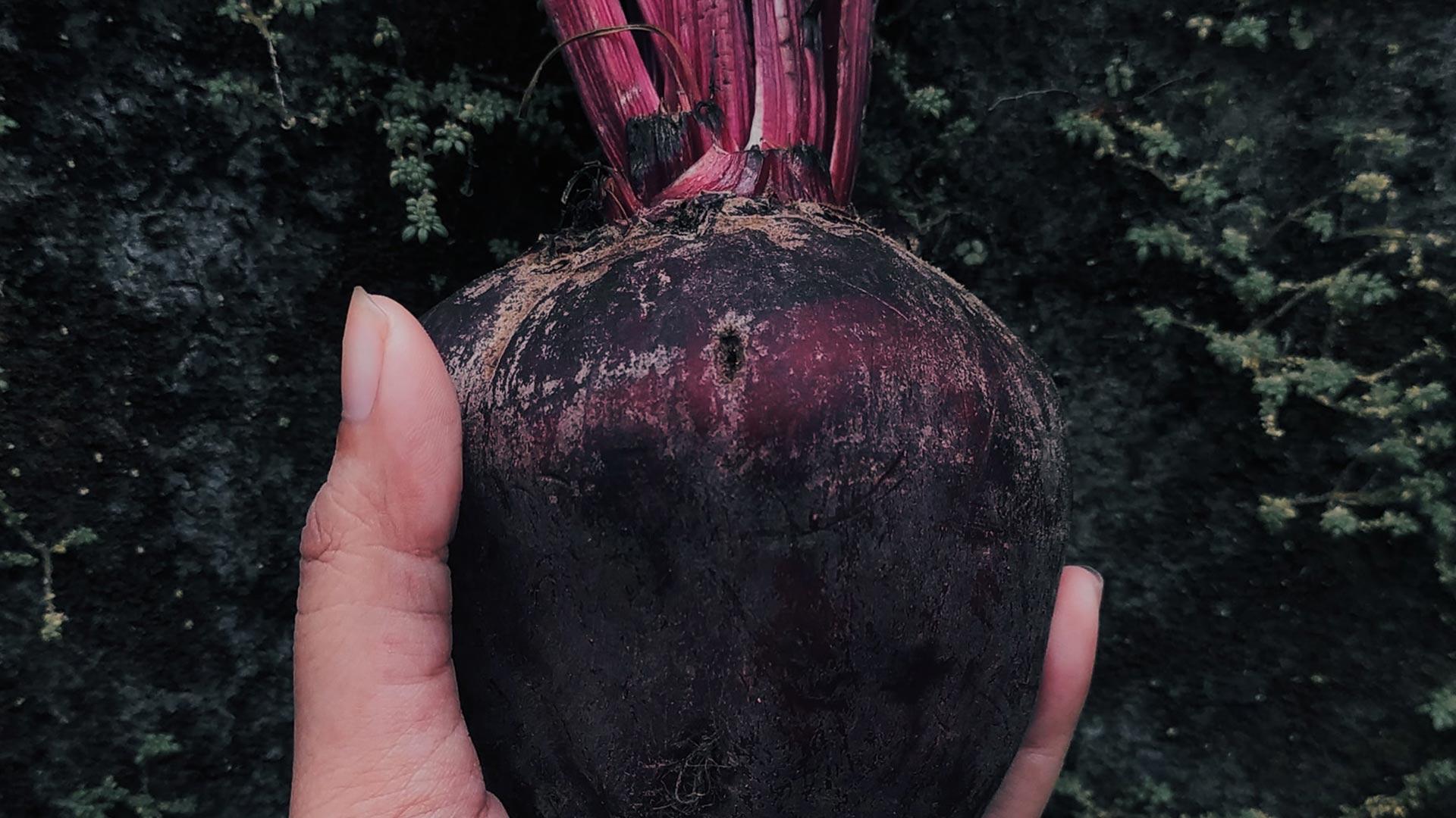 Die Steckrübe - Eine Nutzpflanze für Anfänger einfach desmondo garten