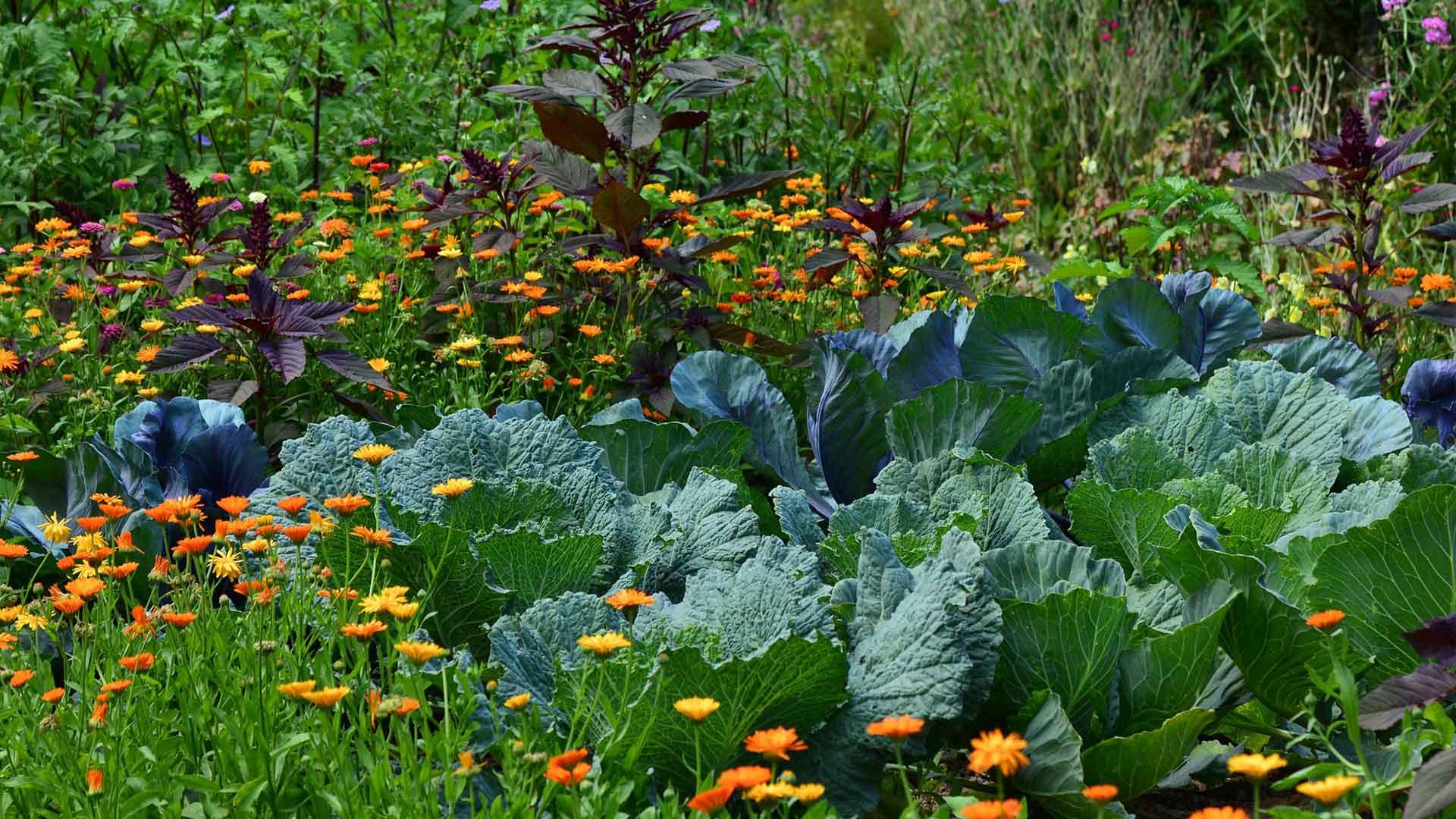 Bauerngarten mit Blumen Obst und Gemüse Desmondo einfach garten