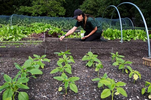 Gemüsebeet anlegen einfach
