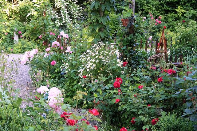 Gartenweg mit Margeriten im Cottage Garten