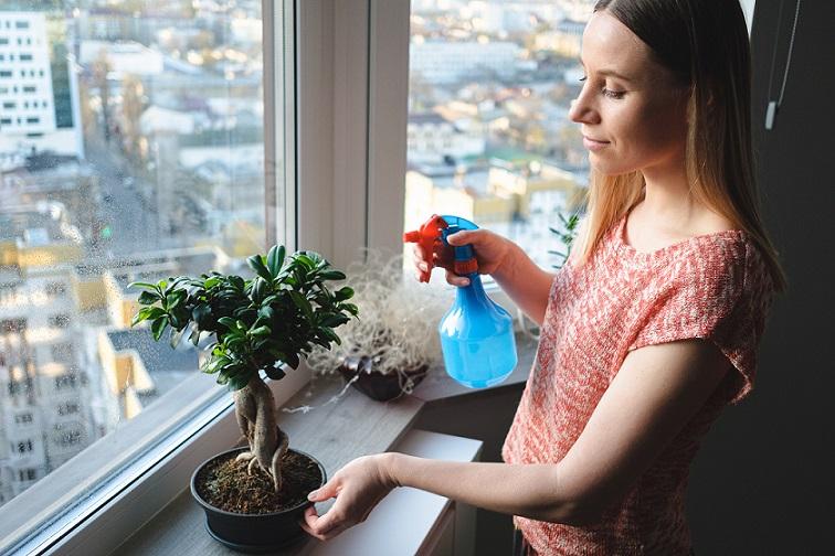 gartentrends 2021 bonsai pflege desmondo