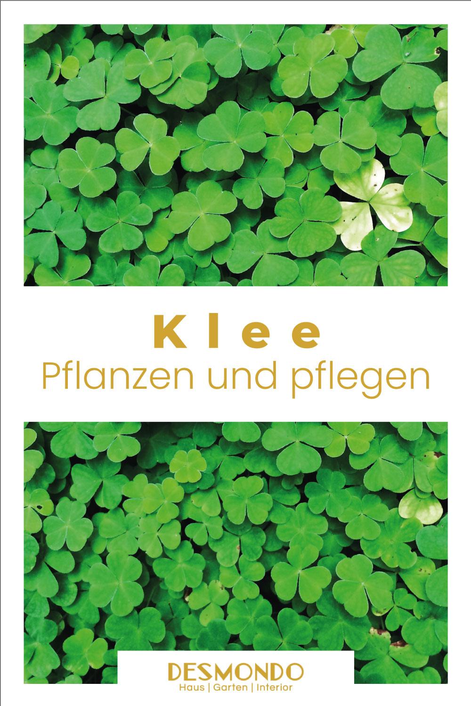 Outdoor - Inspirationen für Balkon und Garten - So wächst Klee auch bei euch - einfach desmondo.de