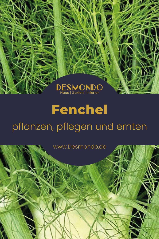 Outdoor - Inspirationen für Balkon und Garten - Fenchel: Pflanzen, pflegen und ernten - einfach desmondo.de