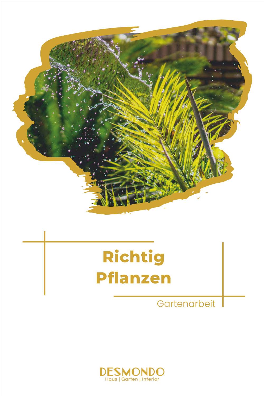 Outdoor - Inspirationen für Balkon und Garten - 14 Fehler, die wir alle beim Pflanzen gemacht haben - einfach desmondo.de