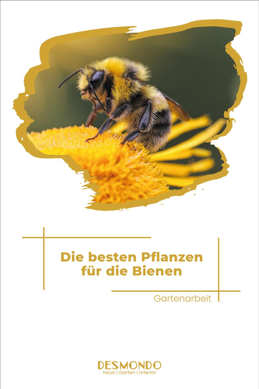 Outdoor - Inspirationen für Balkon und Garten - Die 10 besten Pflanzen für unser kleinen Superhelden - die Bienen - so einfach geht's desmondo