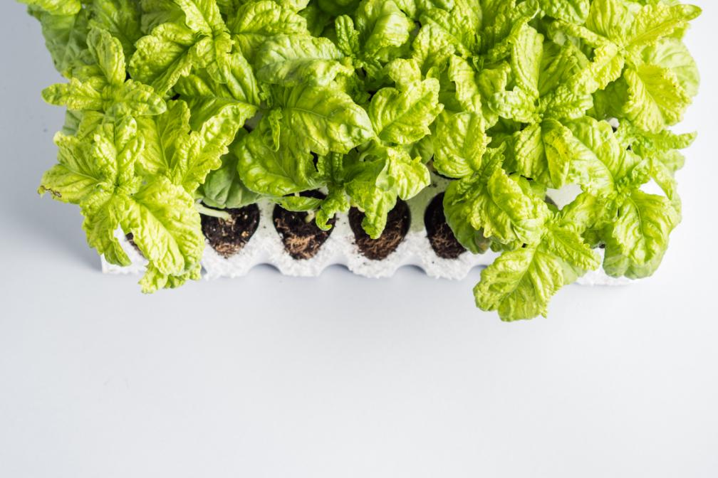 Outdoor - Inspirationen für Balkon und Garten - So pflanzt und pflegst du deinen Basilikum richtig - so geht's einfach desmondo