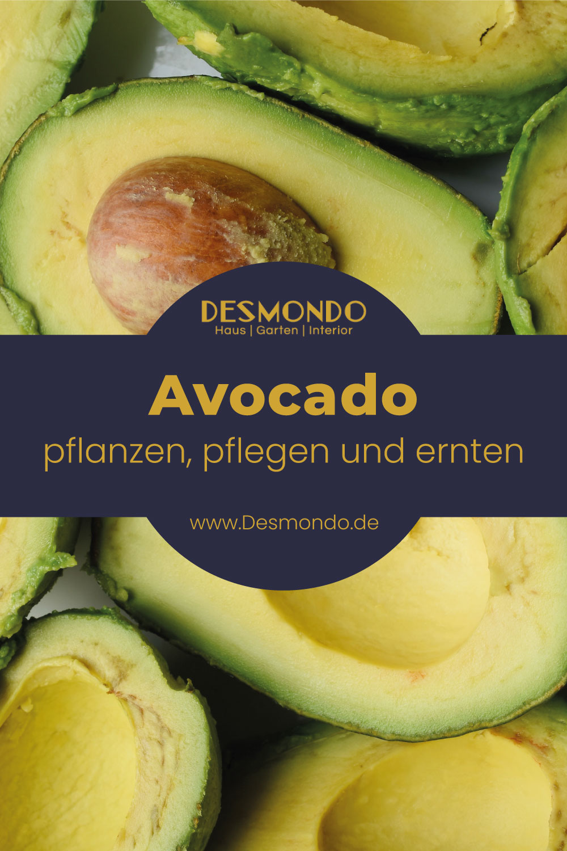 Outdoor - Inspirationen für Balkon und Garten -Avocado: Das grüne Superfood  - so geht's einfach desmondo
