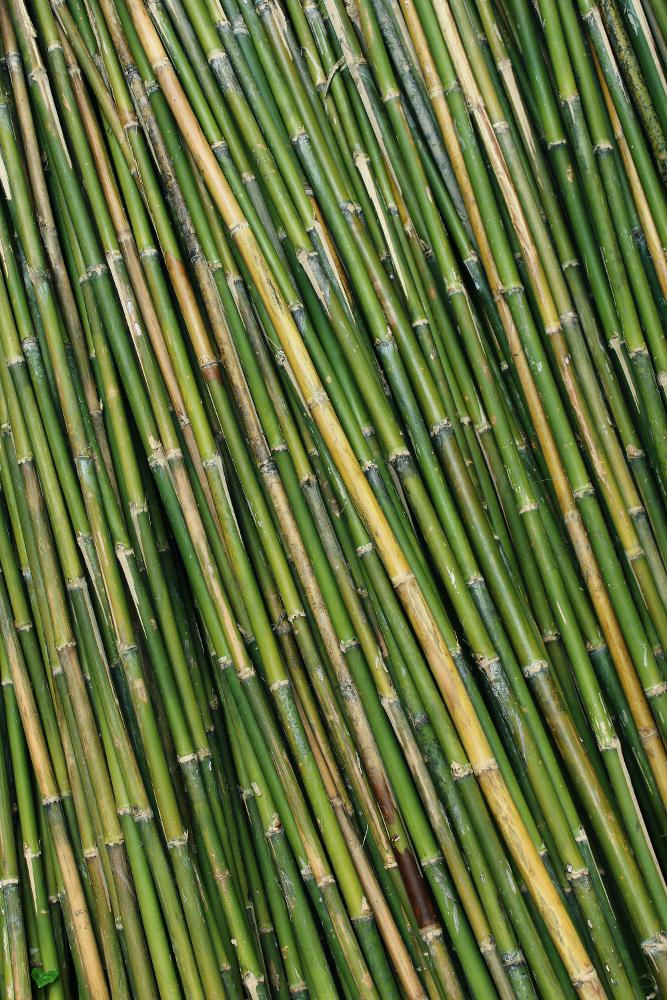Bambus Hecke Pflegen Desmondo