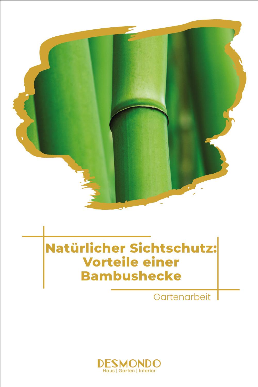 Outdoor- Inspirationen für Balkon und Garten - Natürlicher Sichtschutz: Vorteile einer Bambushecke - so geht's einfach desmondo
