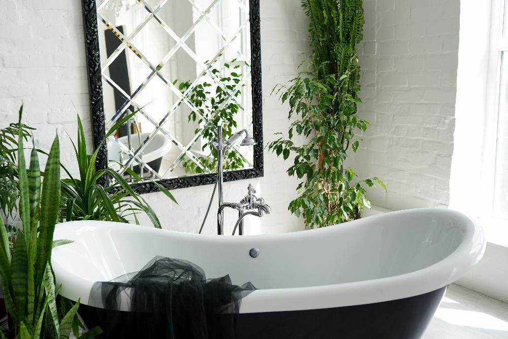pflanzen fürs badezimmer desmondo