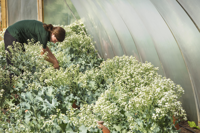 Outdoor - Inspirationen für Balkon und Garten - Gemüse für Schattenplätze - so geht's