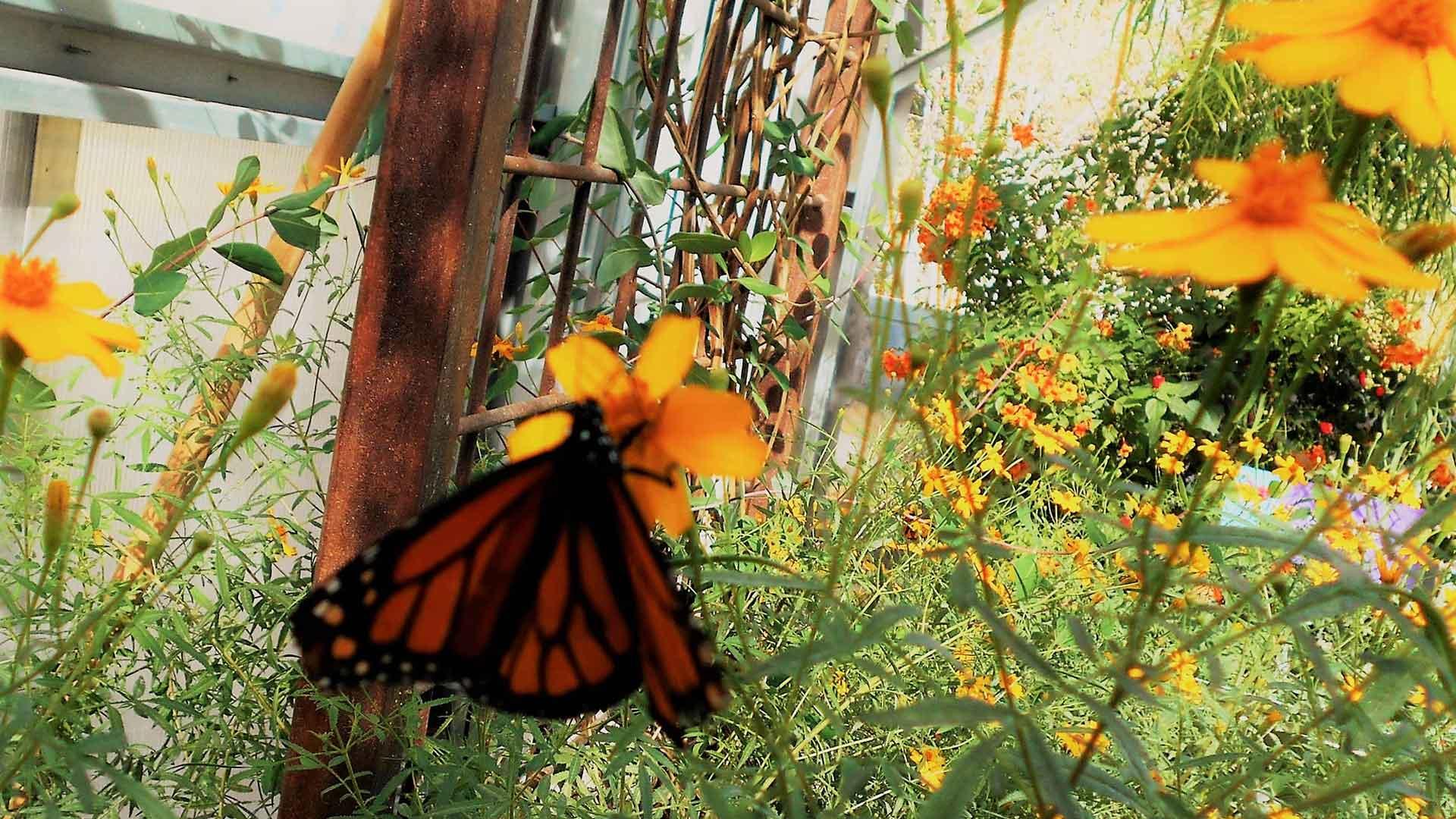 Outdoor - Inspirationen für Balkon und Garten - Vorteile von Schmetterlingen im Garten - so geht's einfach desmondo