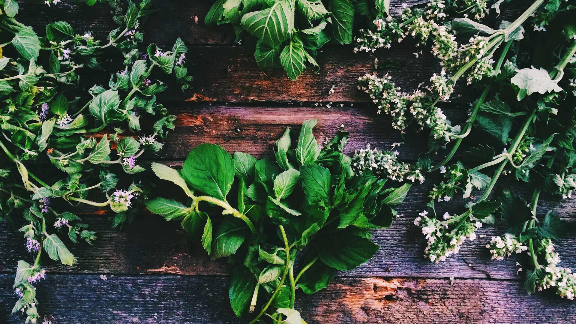 Outdoor - Inspirationen für Balkon und Garten - 17 essbare Wildkräuter für alle Jahreszeiten - so geht's einfach desmondo