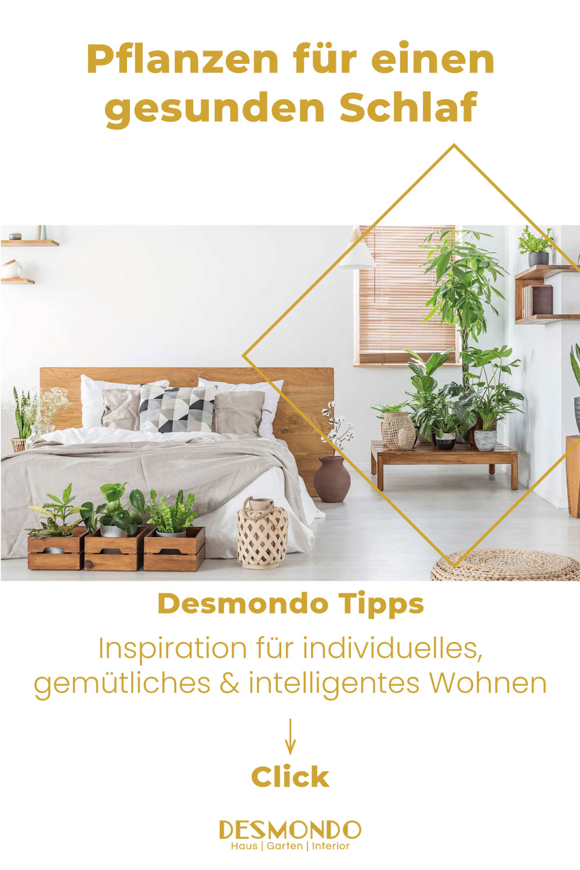 Indoor - Inspirationen für deinen Wohnraum - Pflanzen für einen gesunden Schlaf: Mit diesen Pflanzen im Schlafzimmer - so geht's einfach desmondo