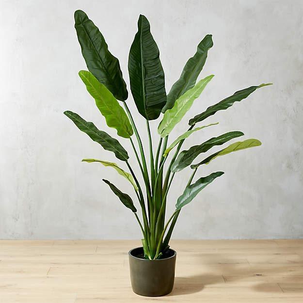 Indoor - Inspirationen für deinen Wohnraum - Paradiesvogelblume (lat. Strelitzia reginae) - so geht's einfach desmondo