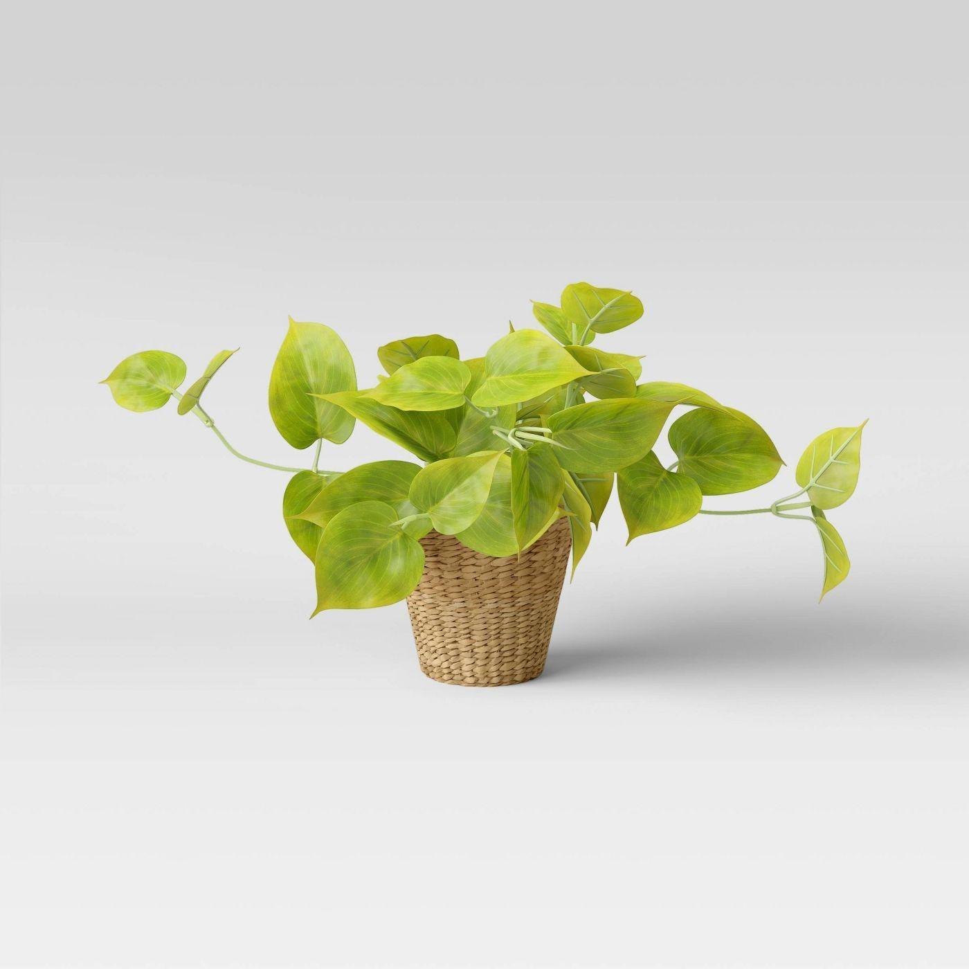 Indoor - Inspirationen für deinen Wohnraum - Goldene Efeutute (lat. Epipremnum aureum) - so geht's einfach desmondo