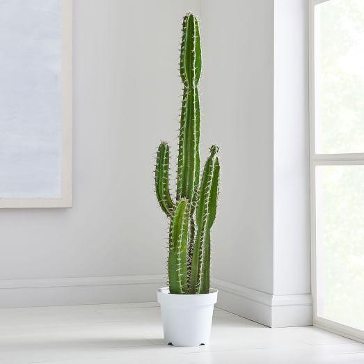 Indoor - Inspirationen für deinen Wohnraum - Topfkaktus - so geht's einfach desmondo