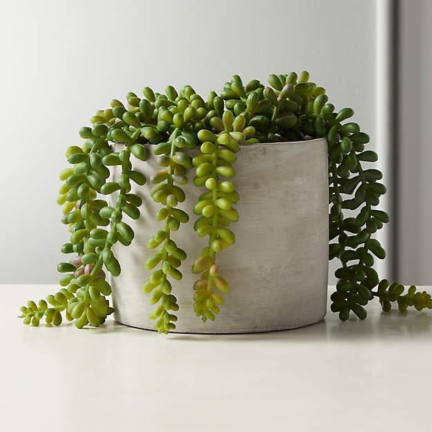 Indoor - Inspirationen für deinen Wohnraum - Schlangen-Fetthenne (lat. Sedum morganianum) - so geht's einfach desmondo