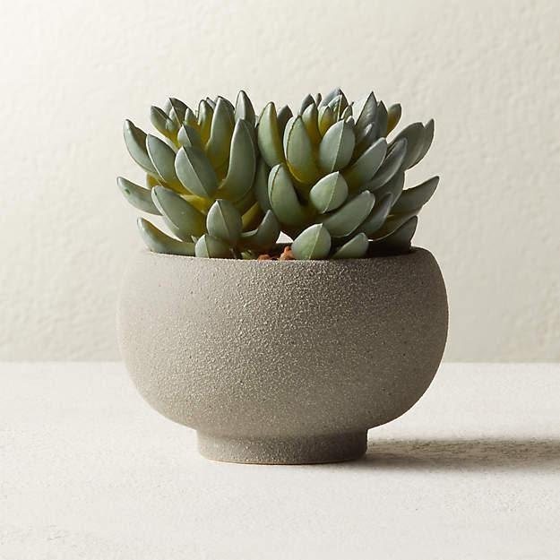 Indoor - Inspirationen für deinen Wohnraum - Topf-Sukkulente - so geht's einfach desmondo