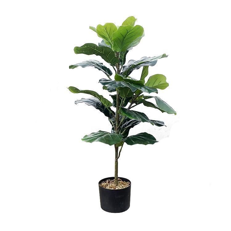 Indoor - Inspirationen für deinen Wohnraum - Geigen-Feige (lat. Ficus lyrata) - so geht's einfach desmondo