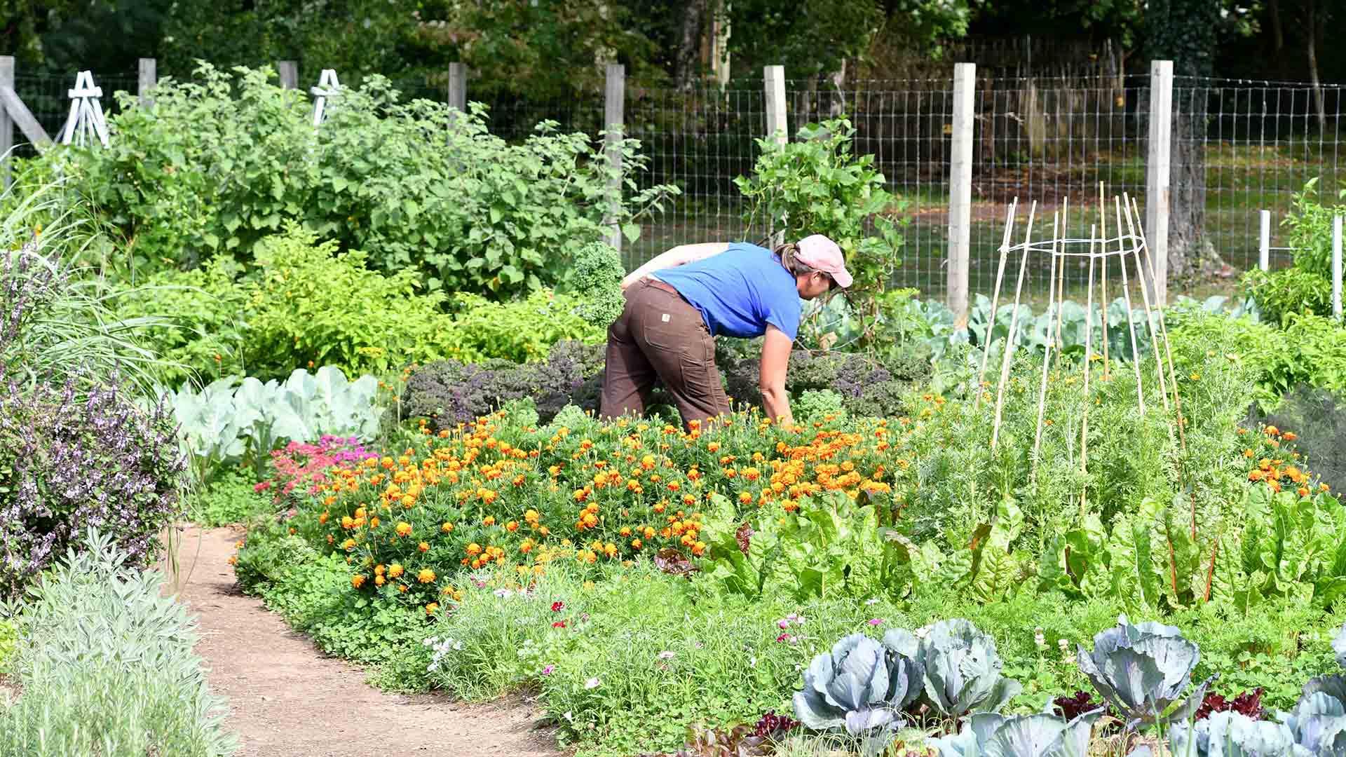 Outdoor - Inspirationen für Balkon und Garten - Planung eines Überlebensgartens für Essen und Medizin - so geht's einfach desmondo