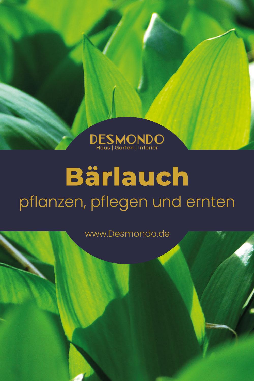 Outdoor - Inspirationen für Balkon und Garten - Regionale Superfoods, die euch keinen Cent kosten- so geht's einfach DESMONDO dein online Shop und Magazin