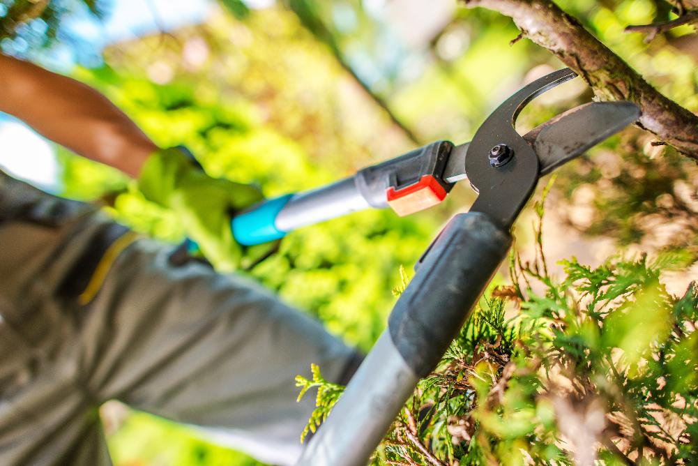 Der richtige Baumschnitt - einfach gemacht. Desmondo