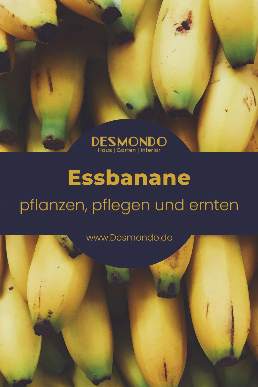 Outdoor - Inspirationen für Balkon und Garten - Essbananen bringen den Sommer ins Haus - so geht's einfach Desmondo online Magazin und Shop
