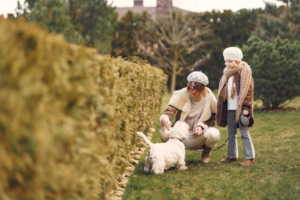 Outdoor - Inspirationen für Balkon und Garten - Tipps für einen hundefreundlichen Garten - so geht's einfach Desmondo dein online Shop und Magazin