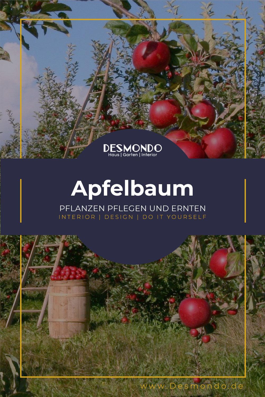 Outdoor - Inspirationen für Balkon und Garten - Alles was ihr über den Apfelbaum wissen müsst - so geht's einfach desmondo dein online Magazin und Shop