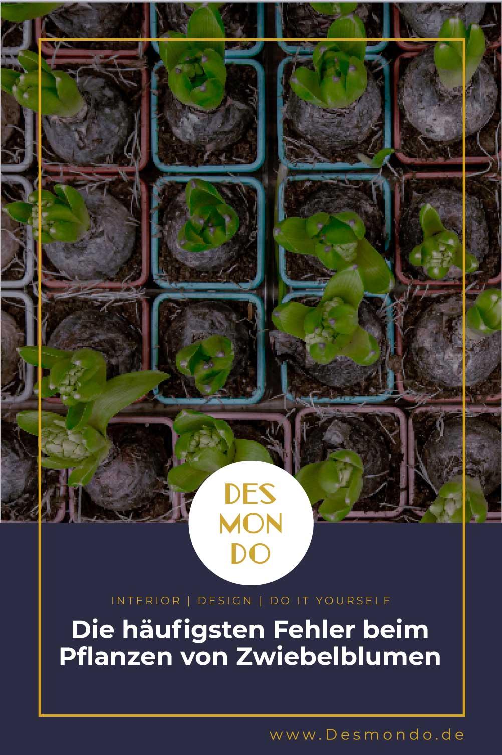Outdoor - Inspirationen für Balkon und Garten - Die häufigsten Fehler beim Pflanzen von Zwiebelblumen- So geht's einfach desmondo dein online Magazin und Shop