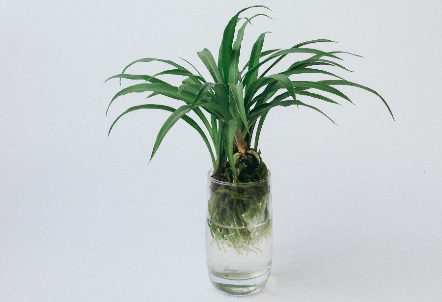 So pflanzt ihr eure eigenen Hydrokulturen