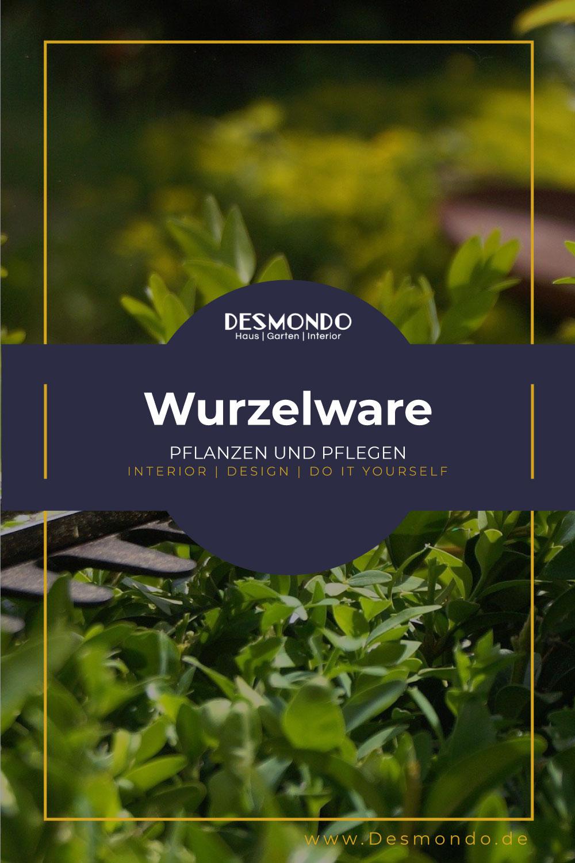 Outdoor - Inspirationen für Balkon und Garten - Anbau und Pflege von Wurzelware - so geht's einfach Desmondo dein online Magazin und Shop