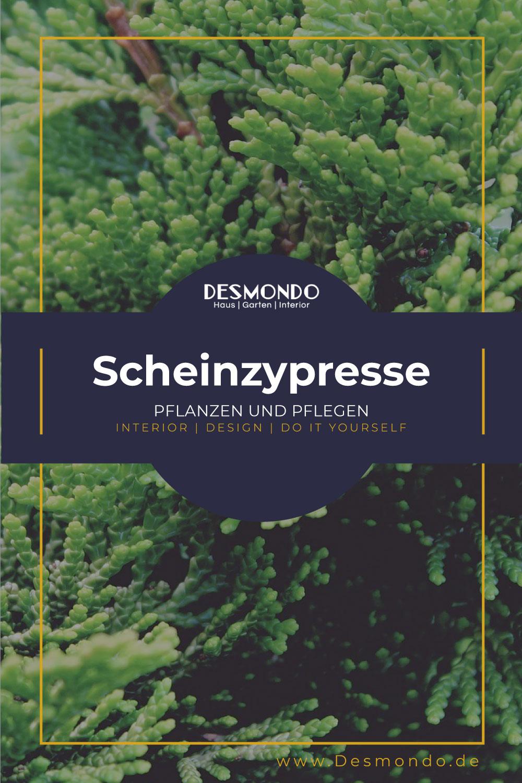 Outdoor - Inspirationen für Balkon und Garten - Scheinzypresse: So pflanzt und pflegt ihr sie- so geht's einfach Desmondo dein online Magazin und Shop