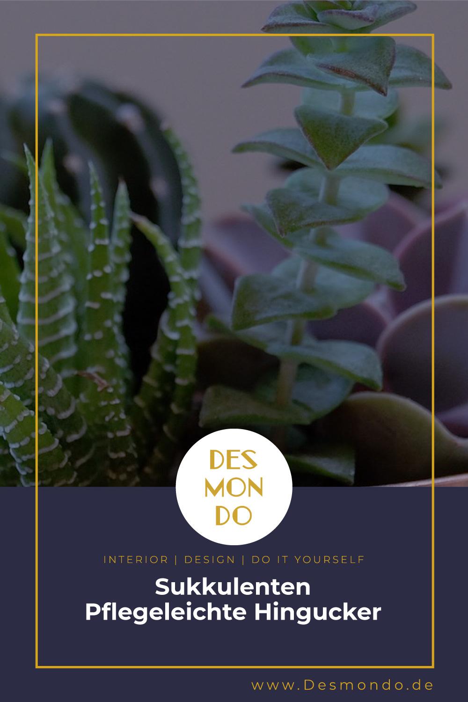 Outdoor - Inspirationen für Balkon und Garten - Sukkulenten: Pflegeleichte Hingucker - so geht's einfach Desmondo dein online Magazin und Shop