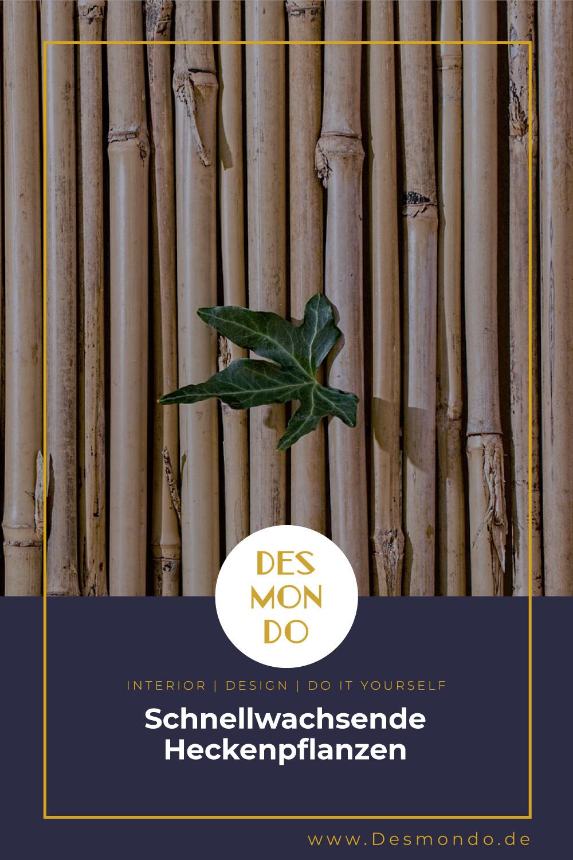Outdoor - Inspirationen für Balkon und Garten - Schnellwachsende Heckenpflanzen- so geht's einfach Desmondo dein online Magazin und Shop