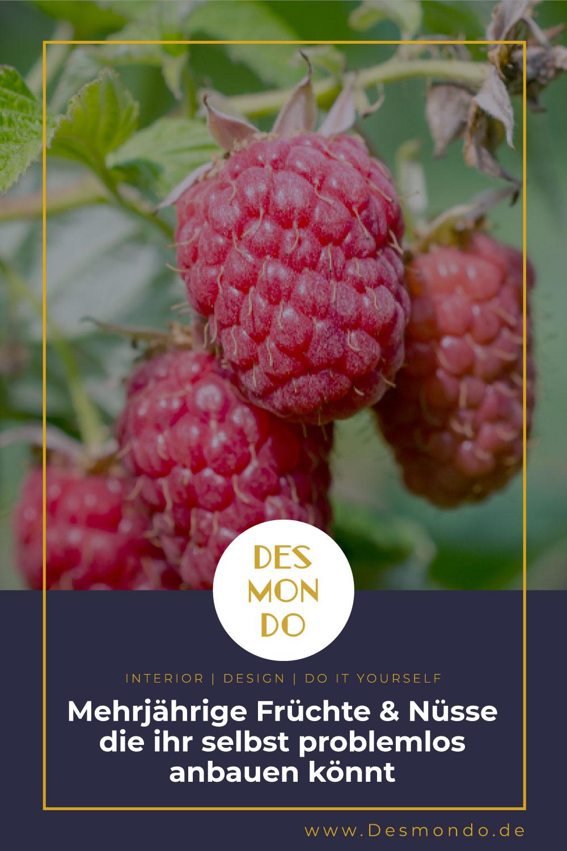 Outdoor - Inspirationen für Balkon und Garten - Mehrjährige Früchte und Nüsse, die ihr selbst problemlos anbauen könnt - so geht's einfach DESMONDO dein online Shop und Magazin
