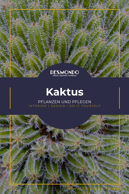 Outdoor - Inspirationen für Balkon und Garten - Der Kaktus - Sommerpflanze leicht gemacht !- so geht's einfach DESMONDO dein online Shop und Magazin